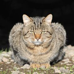 #Woodland cats~  Like,Repin,Share, Thanks!