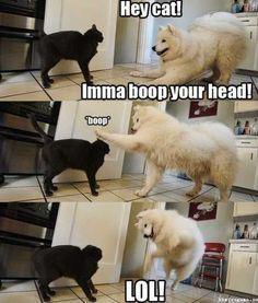 lol oh dogs...