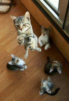Beautiful little kittens are so agile and elegant