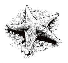 Starfish Drawing, Ocean Drawing, Starfish Art, Starfish Tattoos, Starfish Painting, Shell Drawing, Ink Pen Art, Ink Pen Drawings, Art Drawings Sketches