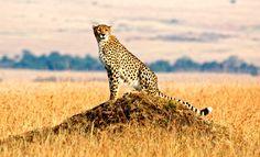 serengeti photos | Highlights of Tanzania: Serengeti Safari in Tanzania with Albatros ...