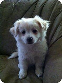 North Las Vegas, NV - Rottweiler Mix. Meet Odie, a dog for adoption.  http://www.adoptapet.com/pet/14759574-north-las-vegas-nevada-rottweiler-mix  | Pinterest ...