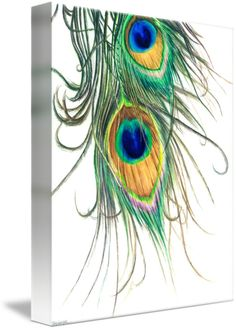 """Peacock Feathers"" by Kelly Eddington"