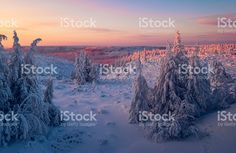 Winter lanscape with sunset, trees and cliffs over the snow. royalty-free stock photo