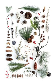 breathe,namaste-We found our inspiration in the nature, her colors and her diversity.Look the nature and wear responsible with us.Buy your Y-Shirt Christmas Time, Xmas, Christmas Plants, Holiday, Nature Collection, Winter Collection, Nature Journal, Diy Décoration, Diy Weihnachten