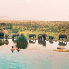 Tanzania, Africa - This indescribable safari. | 27 Pictures That Will Fuel Your Wanderlust