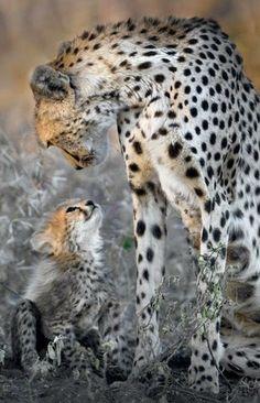 Mamá Cheeta con su hijito