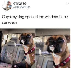 Compilation of cute and funny animal pictures with captions of the day. Check these top 40 latest animal pictures that make you laugh so hard you cry. Animal Jokes, Funny Animal Memes, Funny Animal Pictures, Cute Funny Animals, Funny Cute, Hilarious, Cat Memes, Funny Pics, Dankest Memes