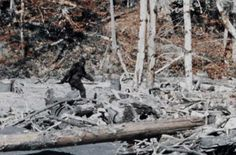 Why the Patterson-Gimlin Bigfoot Film Should Concern Scholars of Human Origins