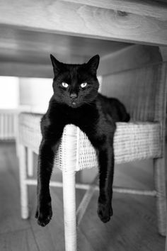 I adore this stylish photo of a chilled out black cat. Purrfect in my opinion! Cool Cats, I Love Cats, Beautiful Cats, Animals Beautiful, Cute Animals, Beautiful Creatures, Crazy Cat Lady, Crazy Cats, Photo Chat