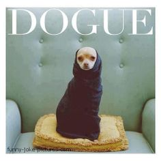 "Can't you just see it saying that? ""Dogue"" Thank you Kelsey"