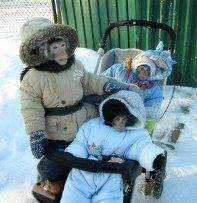 Monkey Babies Bundled for Winter - Awkward Weird Worst Stupid Funny Bad Family Photos Arctic Monkeys, Snow Monkeys, Photos Singe, Bad Family Photos, Funny Animals, Cute Animals, Pet Monkey, Little Monkeys, Reaction Pictures