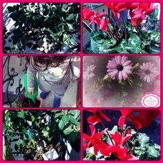 I fiori, che passione...finalmente la primavera