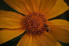 Aula 6 - Bom - índice de qualidade do ambiente, onde tem abelha tem flor! (Nikon D5000)