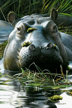 Hippo - Painting Art by Edward Spera - Nature Art & Wildlife Art - Realistic paintings of subjects inspired from the wild - Spera Art Especie Animal, Mundo Animal, Wild Life, Animals Beautiful, Cute Animals, Dangerous Animals, Tier Fotos, African Animals, African Safari