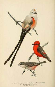 v. 9 (1907) - Bird lore. - Biodiversity Heritage Library