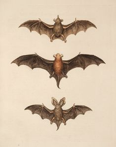 Free Halloween Clip Art - Flying Bats - The Graphics Fairy