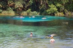 Swimming at Alexander Springs in Ocala National Forest.