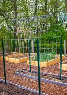 A cattle panel trellis makes a sturdy support for all kinds of vining crops. I installed mine for the vertical growing of winter squash. Cattle Panel Trellis, Cattle Panels, Cattle Panel Fence, Garden Arch Trellis, Wire Trellis, Welded Wire Fence, Vegetable Garden Planner, Fencing Material, Coastal Gardens
