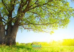 Sunny meadow tree  #backdrop #backdrops #dropz #photography #photobackground #photographybackdrop #cakedrops #vinylbackdrop #photobackdrop #backdropsaustralia