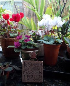 """a happy garden window....   """"In search of my MOTHER'S garden, I found my own."""""""