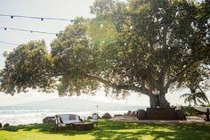 Olowalu Plantation House- ceremony under this tree maybe?
