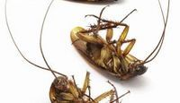 Homemade roach killers!! Texas sized roaches need to be killed without adding to the toxic environment we all live in!