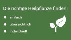 Pfefferminze stark bei Magen-Darm-Beschwerden - NetDoktor.de