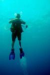 Scuba Diving Pictures, Parrot Fish, Sea Anemone, Anemones, Crystal Clear Water, Shipwreck, Tropical Fish, Barbados, Marine Life