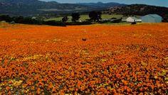 Namaqualand spring