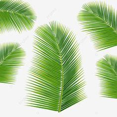 TROPICAL BANANA PALM LEAF ABSTRACT PRINT SCARF WRAP GREEN ORANGE YELLOW MULTI