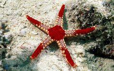 extraordinario mundo del oceano | OTRAS OPCIONES PARA USTED, (elija por favor)