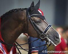 Valegro. Equestrian