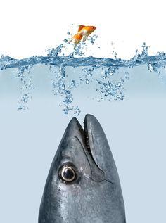 Aquaponic Fish Facts