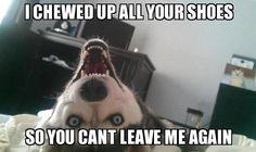 Humor dogs ...For the best funny animal memes visit www.bestfunnyjokes4u.com/lol-funny-cat-pic/
