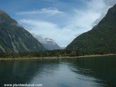 Nouvelle Zélande, Milford Sound, sur l'île du sud. La où les montagnes tombent dans la mer. www.plantesdusud.com