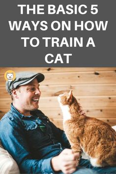 Training is always a part of pet process when you own a pet. Primarily, training a cat is a bit more complicated than a dog. Having the research indicates that despite more than 9000 years of human's petting cats, domestic cats still are semi-domesticated. So, it would be so hard for you on how to train a cat not to do something, do something! Helpful tips for you is that you need to be patient to convince them to know these are a worthwhile task to learn. Pomeranian, Yorkie, Chihuahua, Cat Care Tips, Dog Care, Pet Tips, Tips Fitness, Cat Playground, Kitten Care