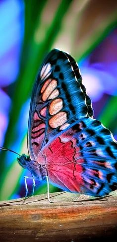 Beautiful Butterfly ༺ß༻krunal Butterfly Photos, Butterfly Wallpaper, Butterfly Art, Butterfly Mobile, Paper Butterflies, Monarch Butterfly, Beautiful Creatures, Animals Beautiful, Cute Animals