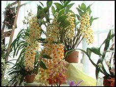 orquideas-programa estilo de vida