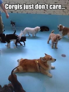 Corgi Names Awesome Pembroke Welsh Corgi FluffyYou can find Pembroke welsh corgi and more on our website.Corgi Names Awesome Pembroke Welsh Corgi Fluffy Animals And Pets, Baby Animals, Funny Animals, Cute Animals, Cute Puppies, Cute Dogs, Dogs And Puppies, Corgi Dog, Dog Cat