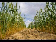 Αγροτική Επικαιρότητα:  Ποιες είναι οι προϋποθέσεις απαλλαγής αγροτών από την τήρηση βιβλίων