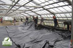 Die Löcher sind fertig, nun wird die Teichplane darüber gelegt. Einige der Teiche wurden zusätzlich mit Glasfasern verstärkt, für die besonders bissigen Arten.