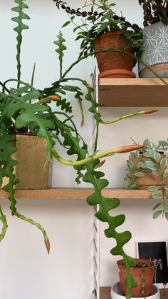 House Plants Decor, Plant Decor, Vine House Plants, Tropical House Plants, Indoor Garden, Wall Of Plants Indoor, Indoor Climbing Plants, Unusual Plants, Rare Plants