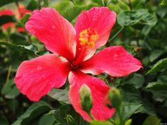 Flower 26 by Mohammad Azam