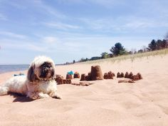 Pack up your pets and hit the road with these dog-friendly Michigan destinations.