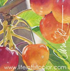 Life in Full Color - Watercolors by Cara Brown