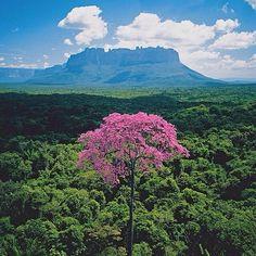 Excelente jueves! Fotografía de árbol #VenezuelaLibreYSoberana
