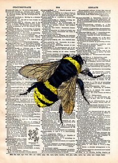 Bumblebee insect drawing 1800's dictionary page book by Loft817, $7.99