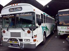 Asotra 2004 Malta Bus, Bluebird Buses, Nice Bus, Vintage Cars, Classic, Vehicles, Beautiful, El Salvador, Autos