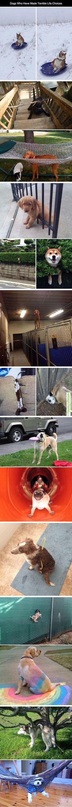 Funniest Memes -